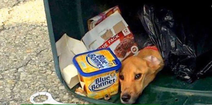 Pies znaleziony w śmieciach