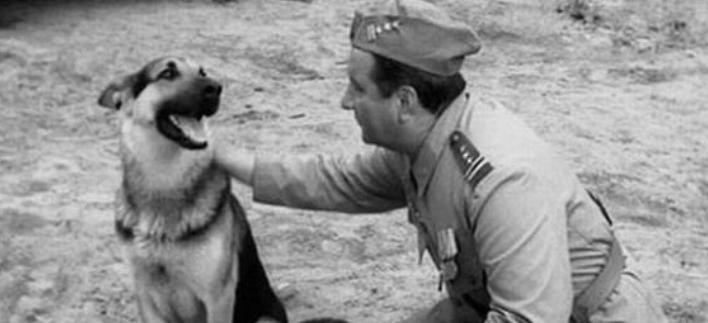 """Ujawniono największy sekret """"Czterech pancernych i psa"""". Chodzi o psa, który grał Szarika"""