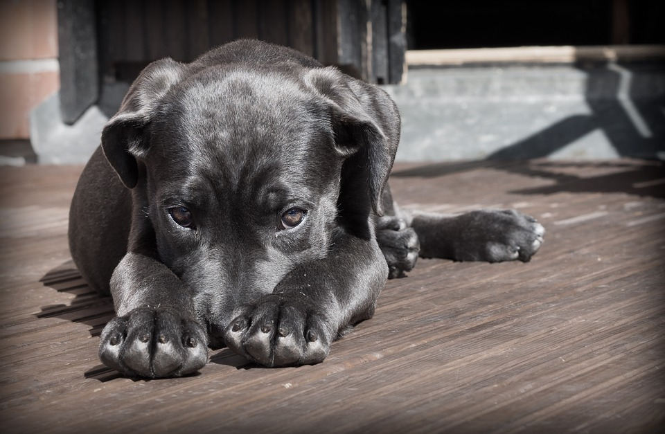 Pies bawił się na tyłach ogrodu, 2 miesiące później umierał w męczarniach. Wszystko przez niepozorną roślinę, lekarze błagają właścicieli o ostrożność