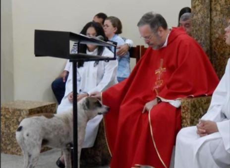 W trakcie mszy po kościele zaczęły biegać bezpańskie psy. Ludzie wpadli w panikę, ale gdy poznali prawdę, wielu nie mogło powstrzymać łez
