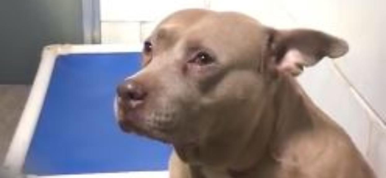 Po urodzeniu szczeniaków trafiła do schroniska. Pewnego dnia nagle zaczęła płakać, powód rozdziera serce
