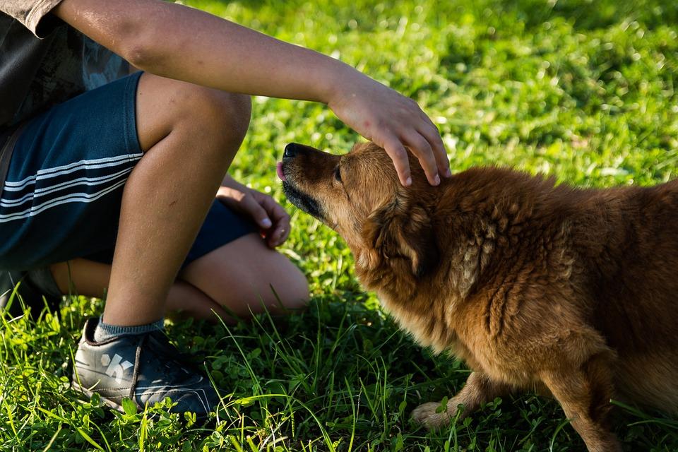 6-letni chłopiec stracił psa. Jego reakcja na śmierć zwierzaka zatkała nawet rodziców