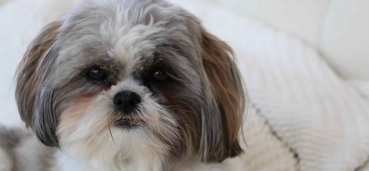 Odkurzacz wciągnął ogon psa i nie chciał puścić. Zrozpaczona właścicielka wezwała policję na pomoc, by go wyciągnęli
