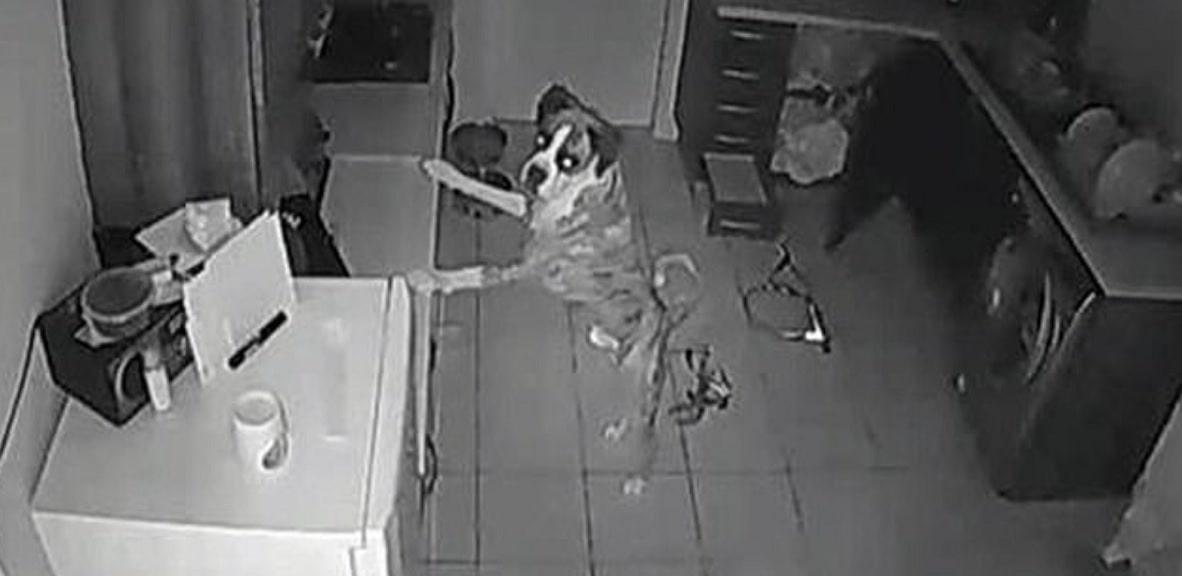 Weszła do domu i zobaczyła krew na podłodze. Nagranie z ukrytej kamery pokazało wstrząsającą prawdę, musiała od razu działać