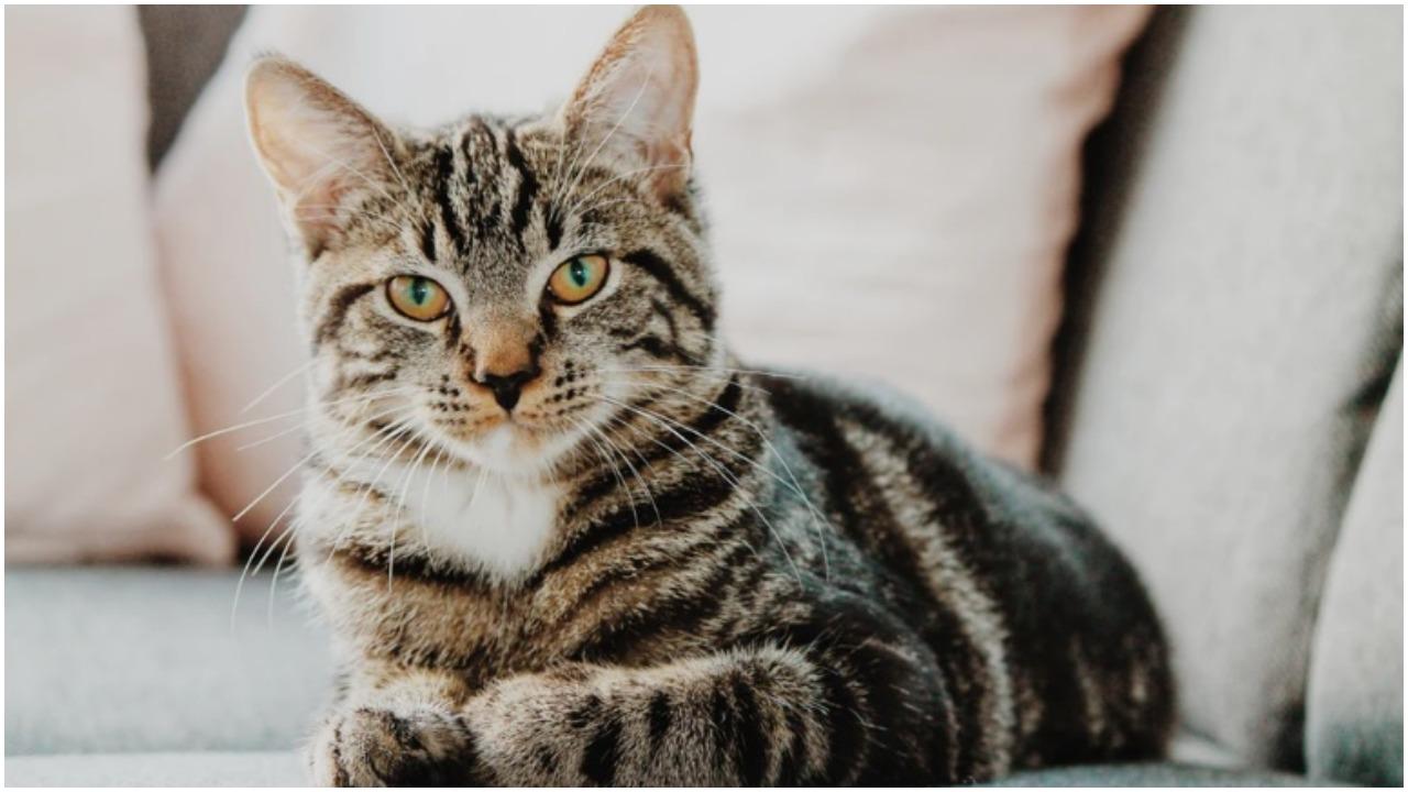 Schronisko uczy koty triku, dzięki któremu natychmiast są adoptowane. Ciężko im się oprzeć, robią piorunujące wrażenie