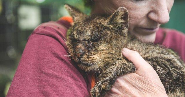 Mimo wielu ostrzeżeń dotknęła bez rękawiczek ciężko chorego kota. Nikt nie mógł przewidzieć, jak to się skończy