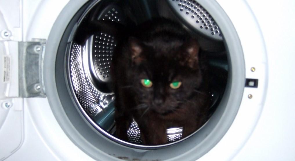 Kot wrócił brudny z dworu. Włożyła zwierzę do pralki i włączyła, finał okazał się tragiczny