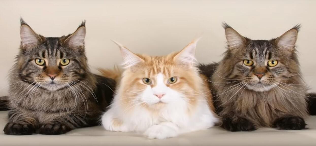 Czy Twój kot Cię zje, jeśli nagle umrzesz? Ekspertka wyjaśnia, kiedy tak się może stać i dlaczego