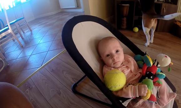 Pies zabrał noworodkowi zabawkę, maluch zaczął płakać. Ale nawet rodzice nie przewidzieli reakcji zwierzaka