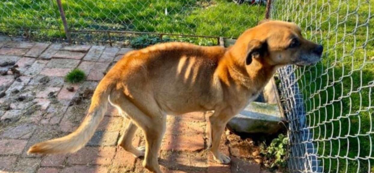 Pies miał guza wielkości noworodka, właściciele nie widzieli problemu. Przez lata cierpiał katusze w brudnym i śmierdzącym kojcu