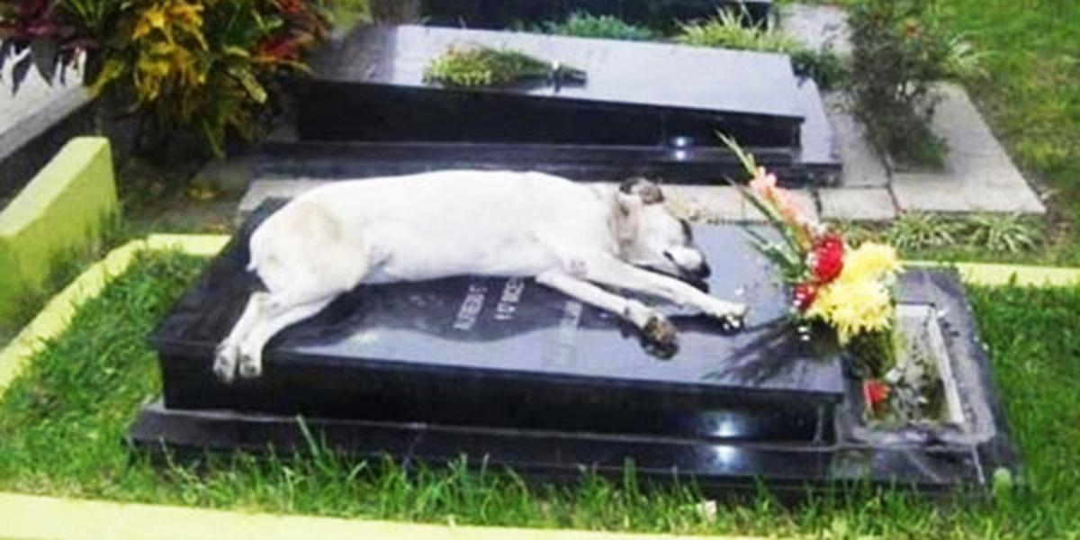 Po śmierci pana pies zniknął. Po kilku dniach rodzina odwiedziła grób i odkryła druzgocącą prawdę