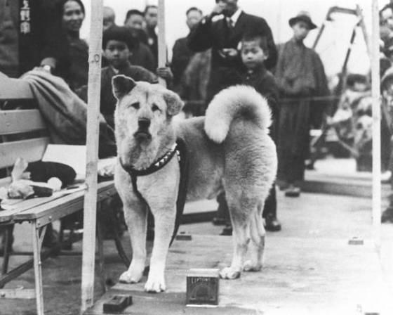Pies zawsze przychodził po swojego pana na dworzec kolejowy. Pewnego dnia nie wrócił, a to co zrobił zwierzak rozdziera serca