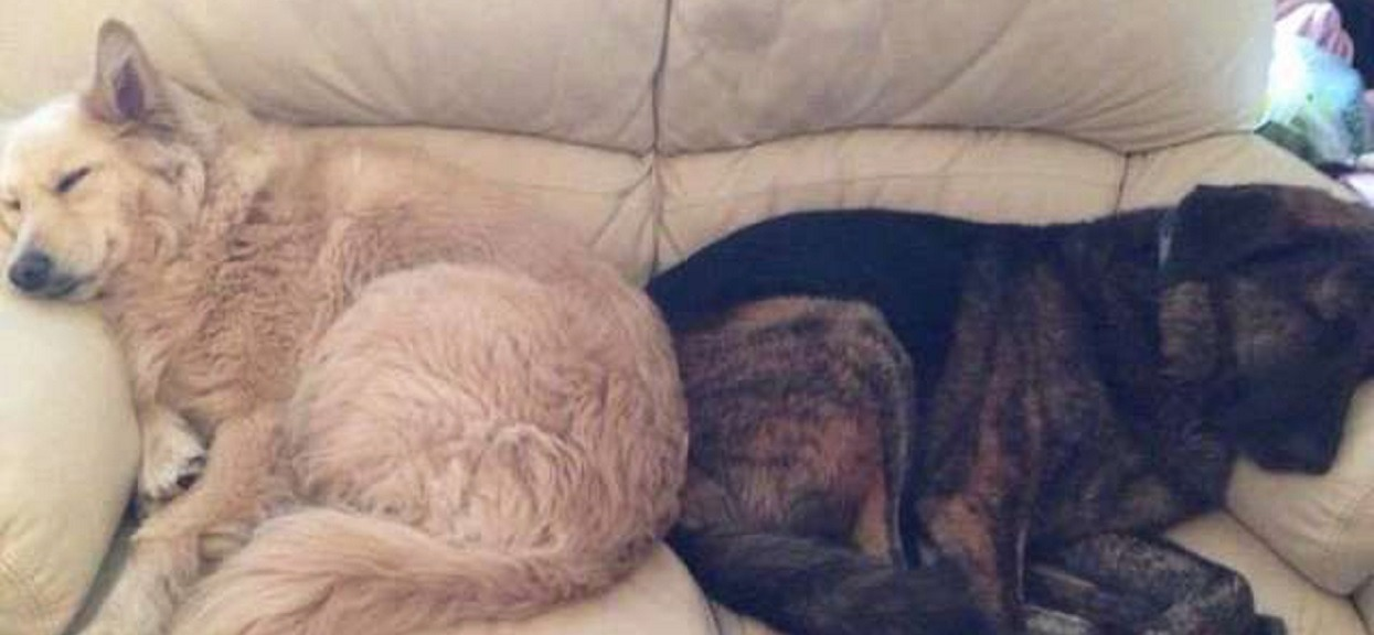 Zostawiła psa w klatce i wyjechała za granicę. Gdy znaleźli zwierzę, było w tragicznym stanie
