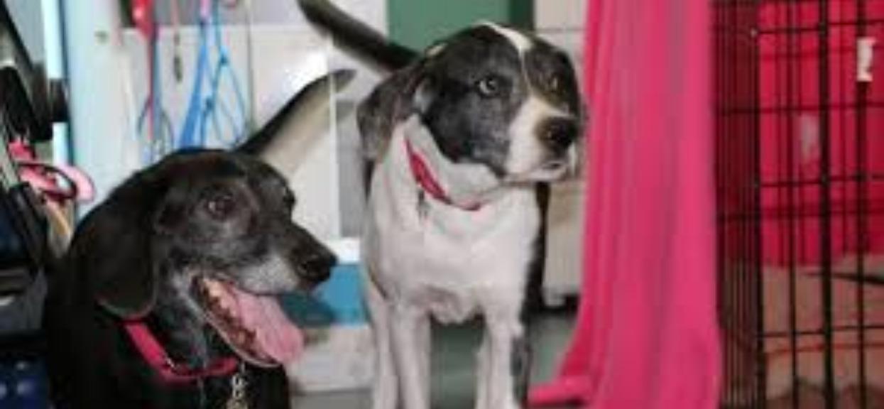 Mężczyzna przywiózł dwa psy do uśpienia. Weterynarz podjął decyzję, od której łzy same napływają do oczu