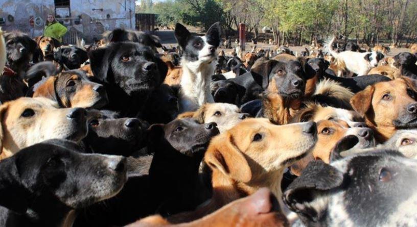 Mężczyzna przygarnął 750 psów. Powód chwyta za serce