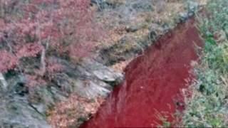 Spojrzeli na rzekę, która była cała czerwona. Prawda okazała się przerażająca, zorganizowano rzeź kilkudziesięciu tysięcy zwierząt
