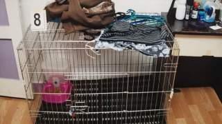 Trzymali syna w klatce dla kota. Ale to nie było najgorsze, co mu zrobili, wstrząsające doniesienia