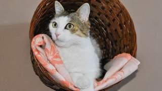 Mężczyzna oddał kota do schroniska. Okazało się, że pod kocykiem, na którym leżał, czekała  wielka niespodzianka