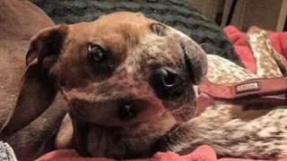 Wszyscy myśleli, że pies ze zdjęcia jest zdeformowany. Prawda jest zupełnie inna