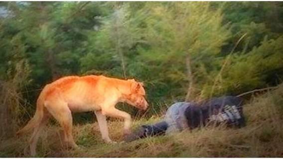 Pies był agresywny