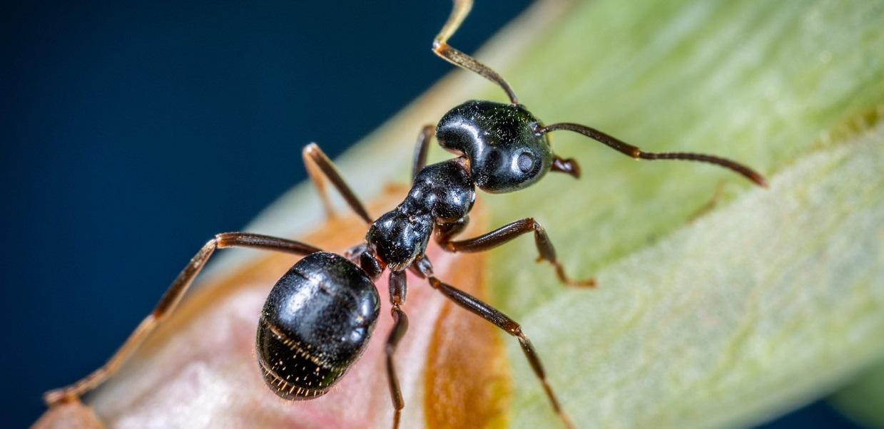 Genialny sposób, by pozbyć się mrówek z domu raz na zawsze. Jedyne czego potrzebujesz, znajdziesz w warzywniaku za parę groszy