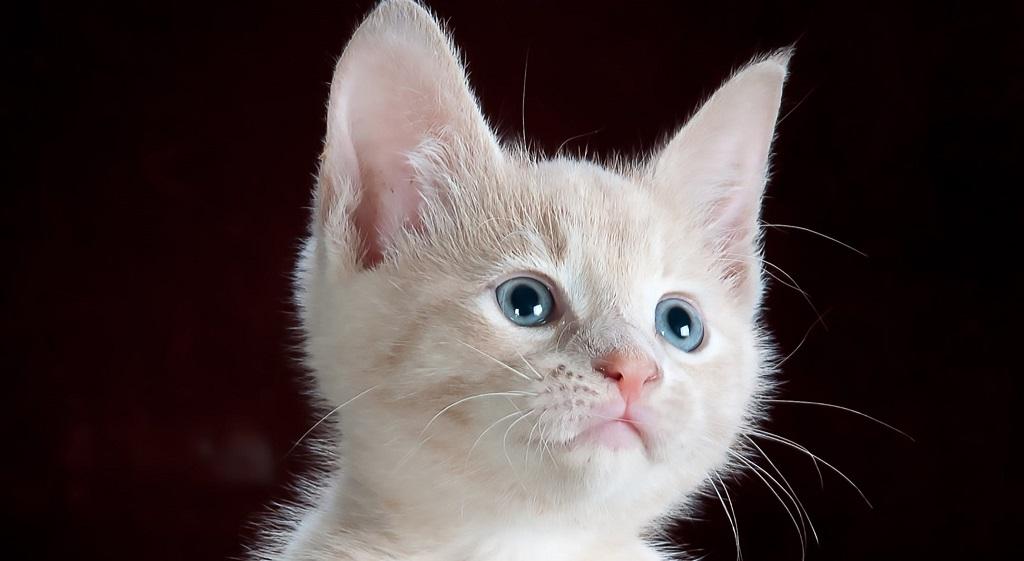 Nigdy nie głaszcz kota w kilku miejscach. Tylko niektóre pieszczoty sprawiają mu przyjemność, dzięki nim zwierzak oszaleje na Twoim punkcie