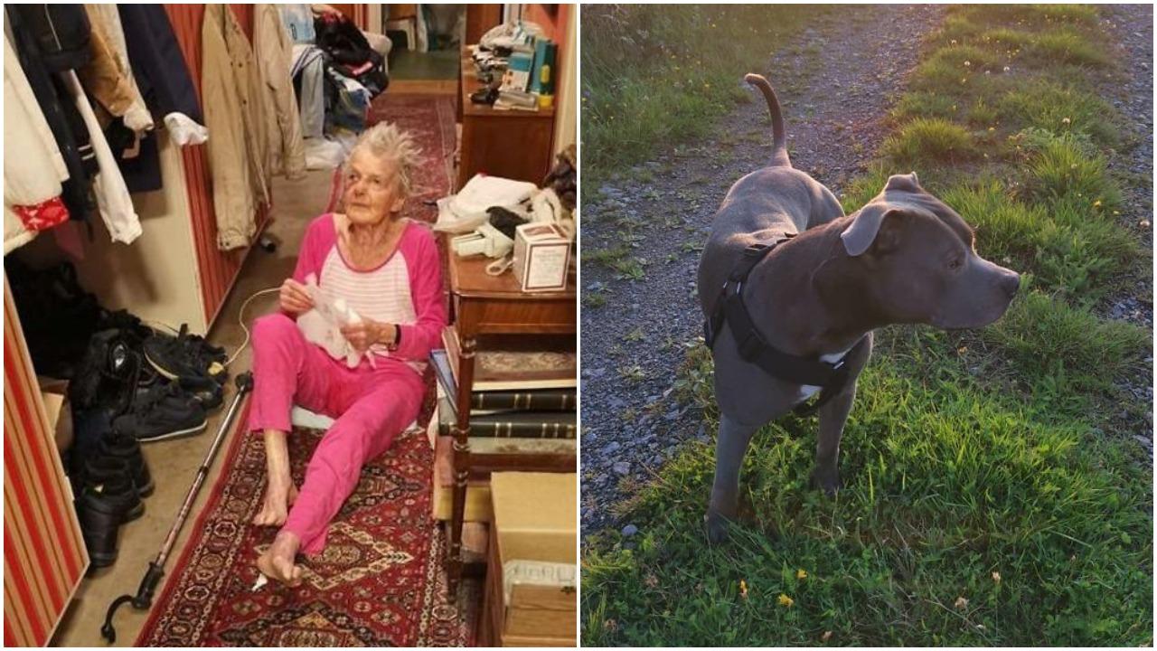 Od zawsze bała się pitbulla sąsiada. Pewnego dnia pies zaczął szczekać i ruszył do jej domu, natychmiast wezwali karetkę