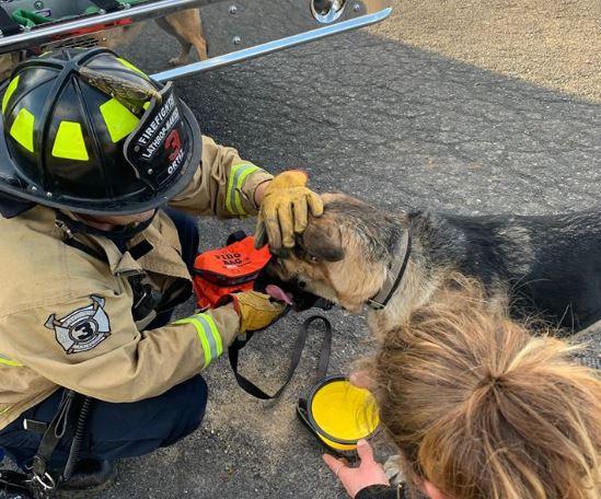 Pies zapędził się w gonitwie za kotem. Cały zastęp straży pożarnej musiał go ratować z zaskakującego miejsca