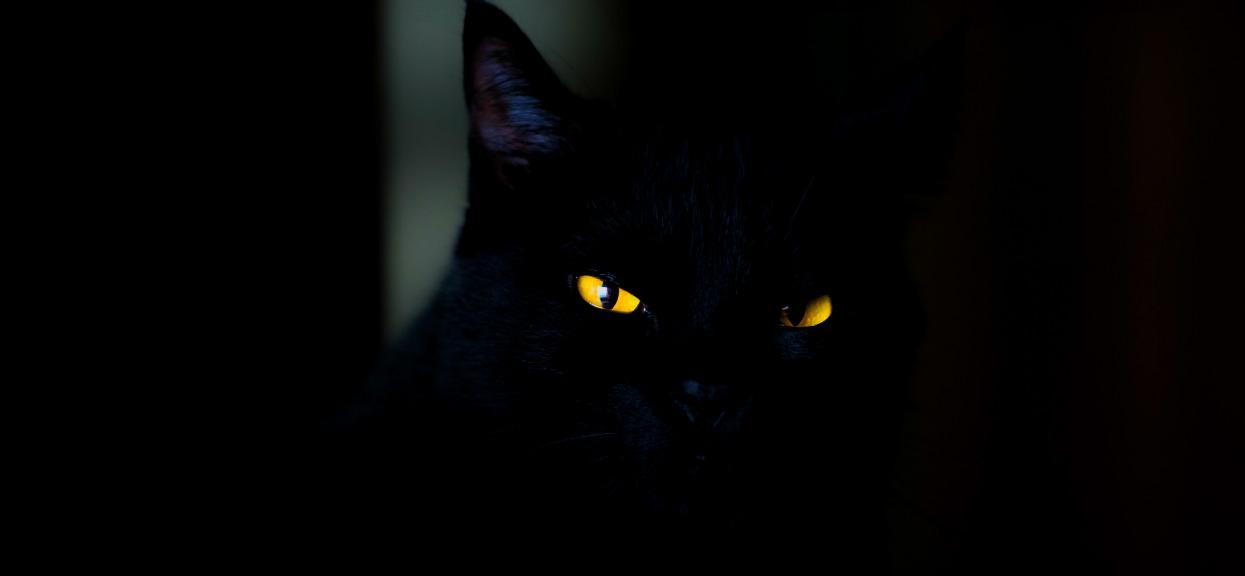 Spojrzał pod łóżko i zamarł z wrażenia. W życiu nie widział zwierzęcia w takim stanie