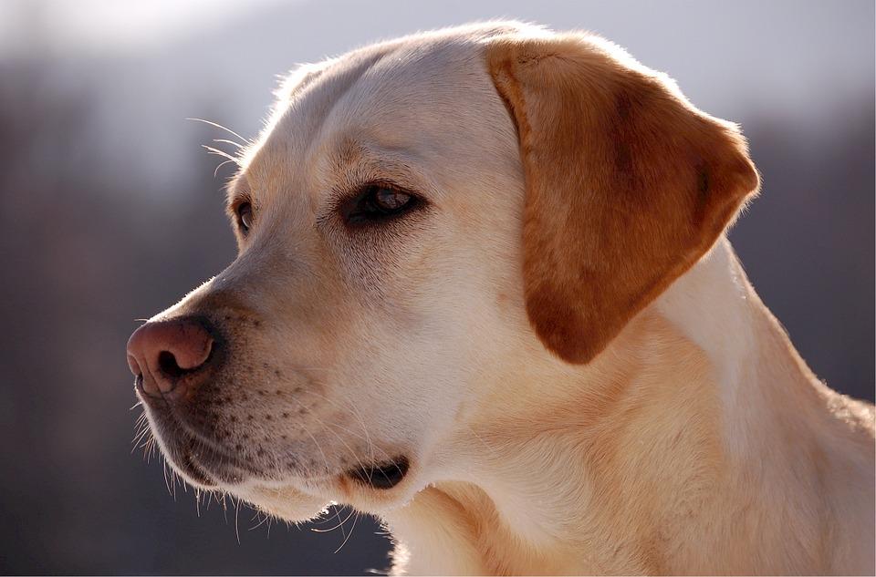 Pies przeszedł ciężką operację. Wybudził się, a jego przeszywającą reakcję na widok właściciela nagrała kamera