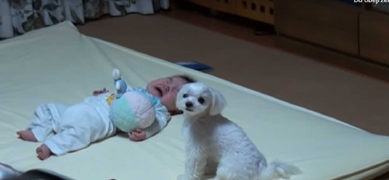 Dziecko nagle zaczęło płakać przy malutkim, słodkim psie. Reakcji zwierzaka nie przewidziała nawet właścicielka