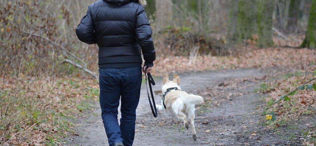 Pies na spacerze nagle wyczuł dziwną rzecz. Jego właściciel nie mógł uwierzyć własnym oczom, kiedy zwierzak rzucił się w konkretnym kierunku