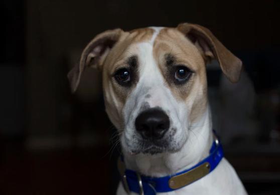 Co zrobić, żeby pies nie bał się wystrzałów w Sylwestra? Weterynarz ma kilka prostych rad