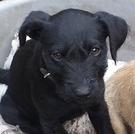 Bezbronny szczeniak zmarł na zawał serca. Najgorsze, że wszystkie psy lada moment będą w tym samym niebezpieczeństwie