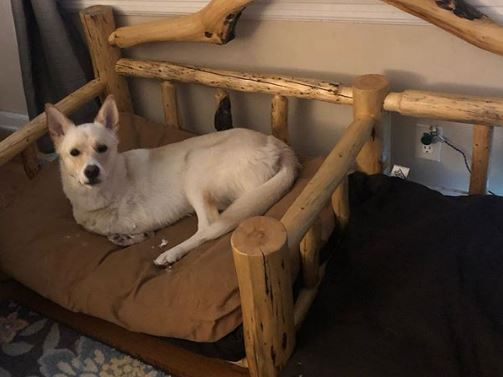 Pies urodził się z deformacją przednich łap. Pomogli mu w spektakularny sposób, teraz nikt go nie dogoni