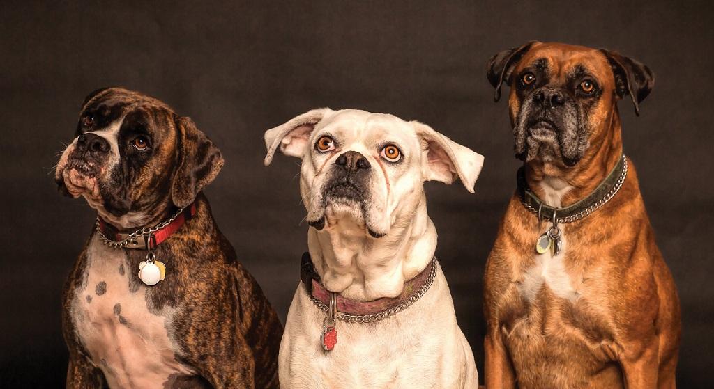 Psy będą mogły pobierać emeryturę. Jest propozycja rewolucyjnych zmian w prawie