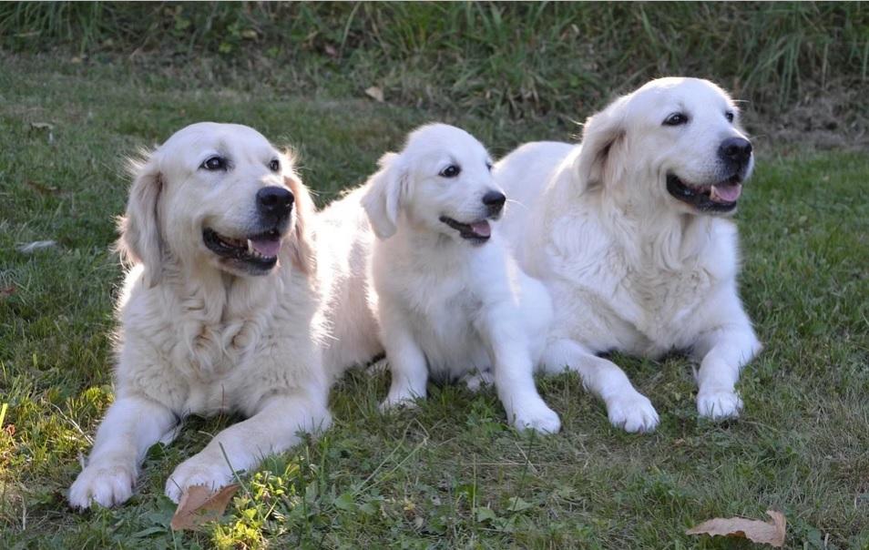 Czy psy rozumieją, co do nich mówisz? Naukowcy przeprowadzili badania, wyniki są niebywałe