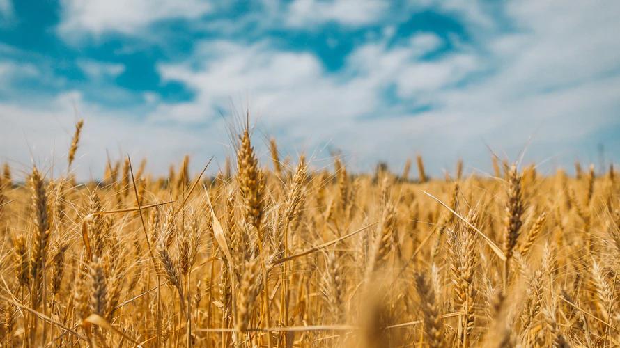 Rolnik nie mógł poradzić sobie z intruzami na polu. Wpadł na szalony pomysł, wykorzystał do niego psa