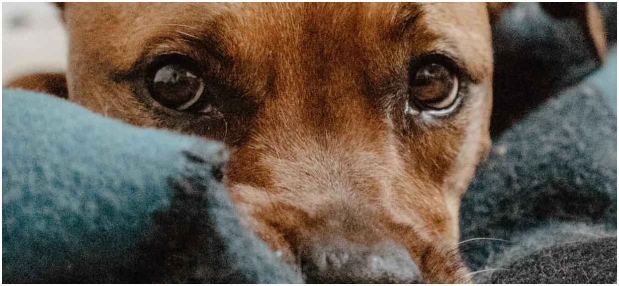 Pies był ranny, potrzebował pomocy. Kobieta od ratownika usłyszała tak niecenzuralne słowa, że aż wstyd je przytaczać