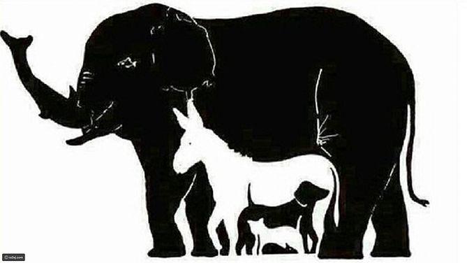 Internauci nie mogą się dogadać, ile zwierząt jest na obrazku. Tylko nieliczni potrafią znaleźć wszystkie