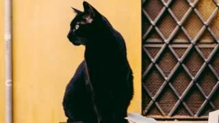 Mieszkańcy są bezradni, ich koty zdychają na potęgę. Na miejscu był nawet egzorcysta