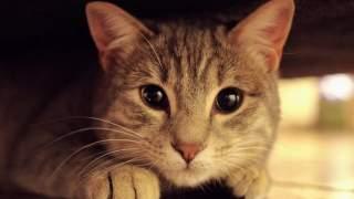 Wystarczy przyjrzeć się bliżej, żeby poznać powód. Najbardziej unikalny kot świata