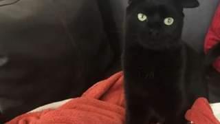 Ma inne uszy niż reszta kotów, są niezwykle wyjątkowe. Na jego widok od razu można się zakochać