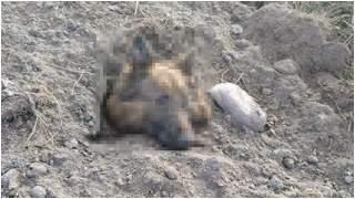 Ciało pieska było przykryte ziemią, wystawał tylko pyszczek. Tragiczne znalezisko, służby apelują o pomoc