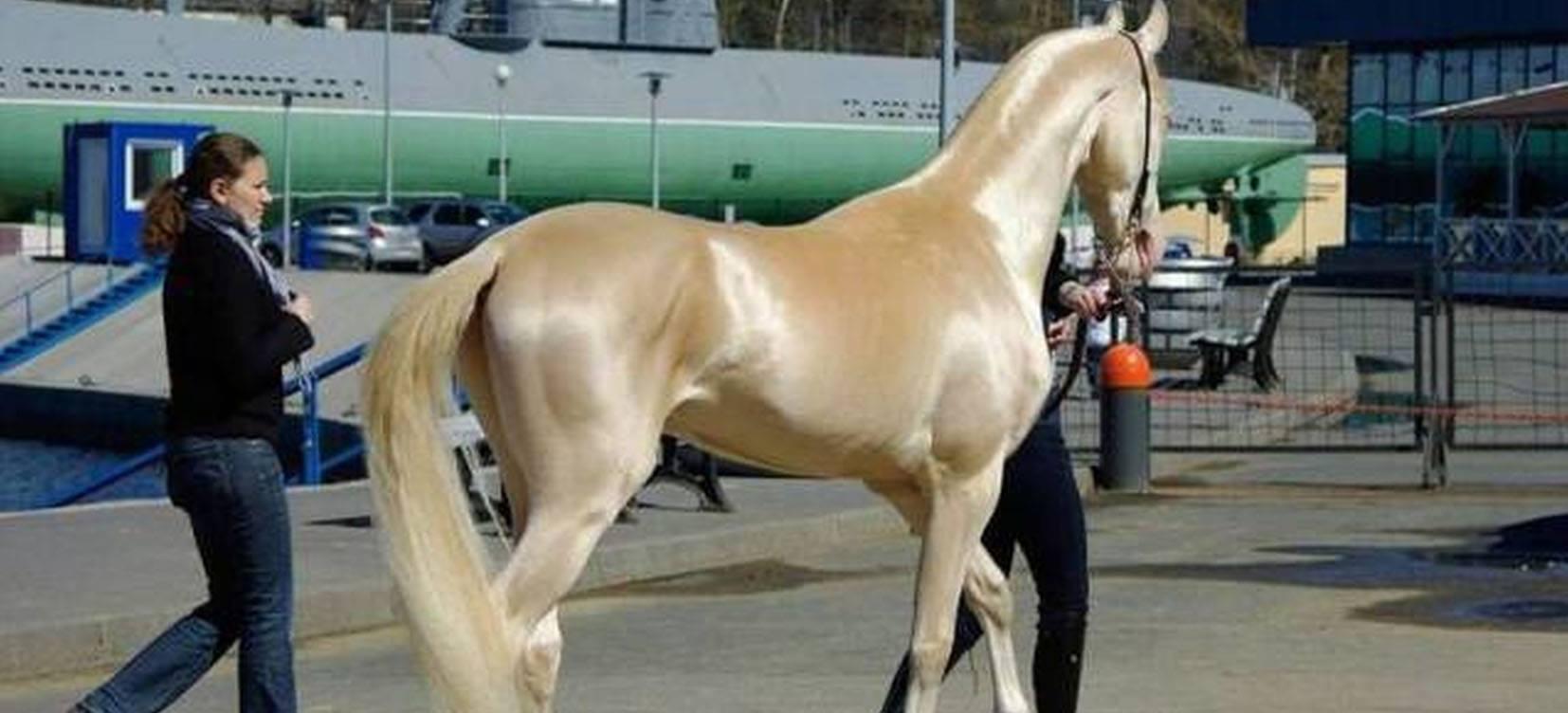 Przepiękny koń