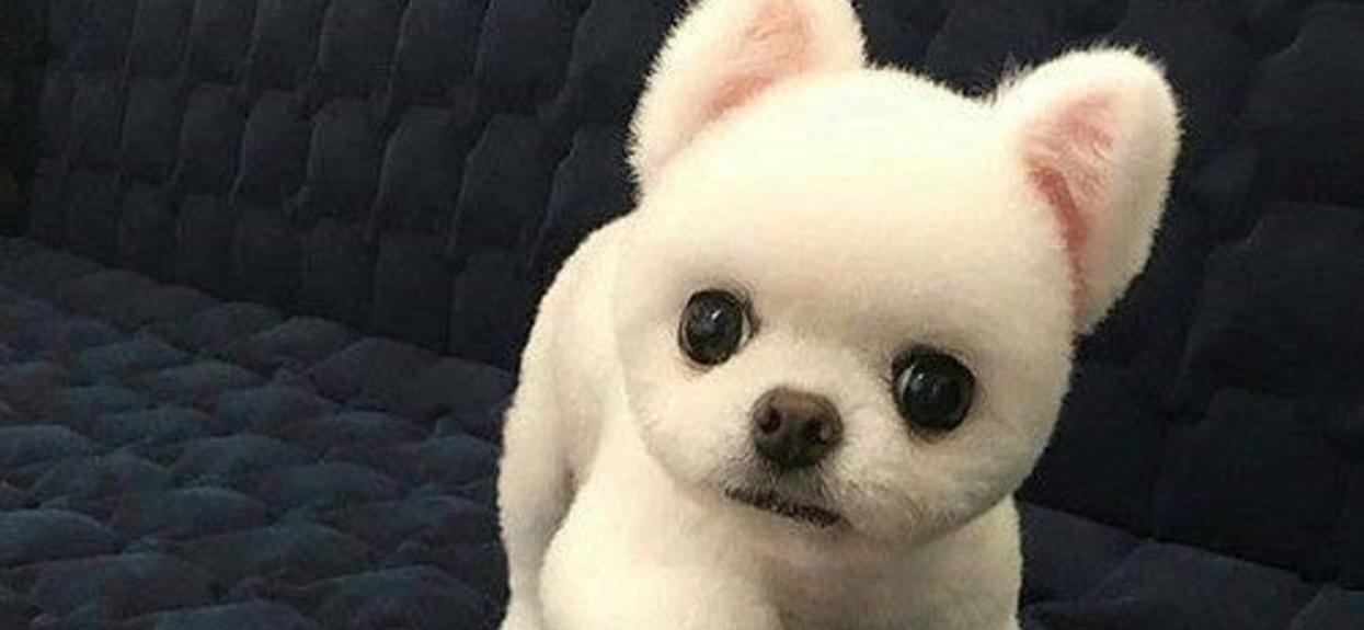 Dzień dobry, ładny jestem?