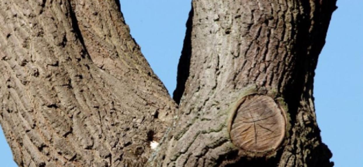 Wszyscy się poddają. Na drzewie siedzi sowa, widzisz ją?