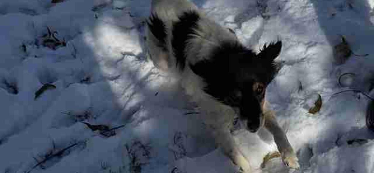 Uratowała psa przed śmiercią na siarczystym mrozie. Reakcja zwierzaka wprawia w osłupienie