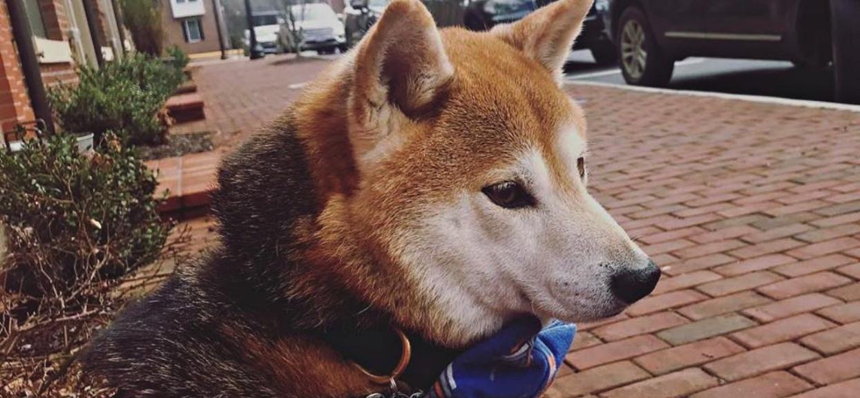 Rodzina porzuciła 10-letniego psa. Nikt nie chce go adoptować przez jeden szczegół