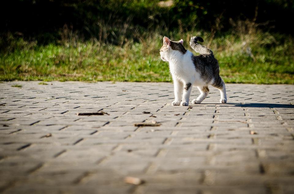 Zobaczyła, że jej pies rzucił się w kierunku bezbronnego kociaka. Zamarła i zaczęła nagrywać
